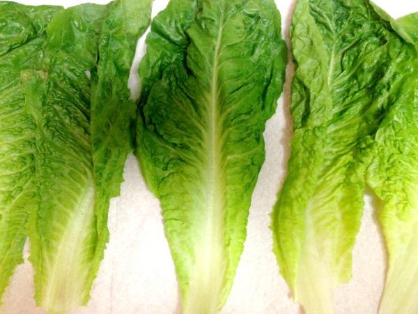 lettuce_leaves